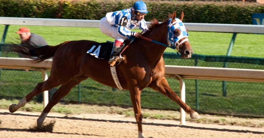 Horse Breeds That Are Best For Racing