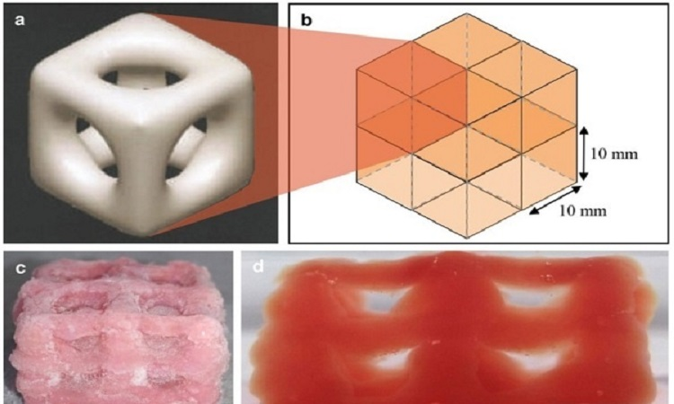 3D Printed Soft Structures Can Assist In Organ Transplants, Tissue Regeneration