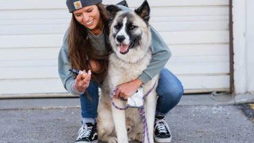 CBD Can help Dogs Sleep Better